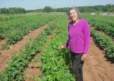 Peas - C&H Farms
