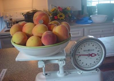 Delicious Peaches!
