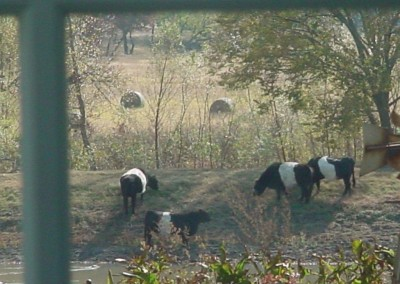Belties from window