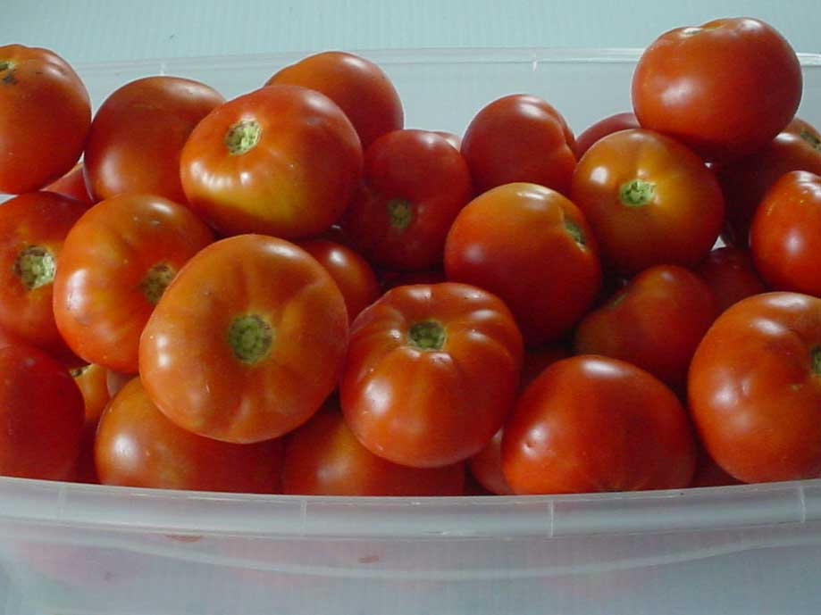 C&H Farms - Tomatoes